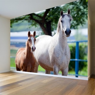 Horse with Thai Wall Poster